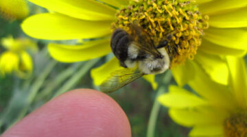 Attracting Bees To Your Garden: 10 Helpful Tips + A List Of Plants That Attract Bees