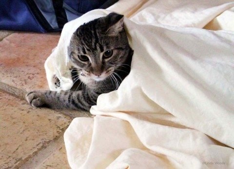 cat-playing-in-sheets