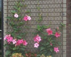 Free and Easy Ideas to Build a Reclaimed Trellis
