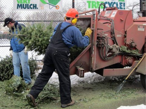 Christmas Tree Mulch