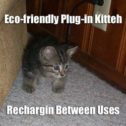 eco-friendly-kitty.jpg