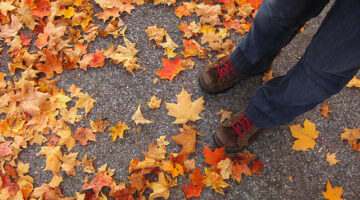 Easy Fall Foliage Recycling Ideas: Ways To Reuse Autumn's Colorful Leaves At Home
