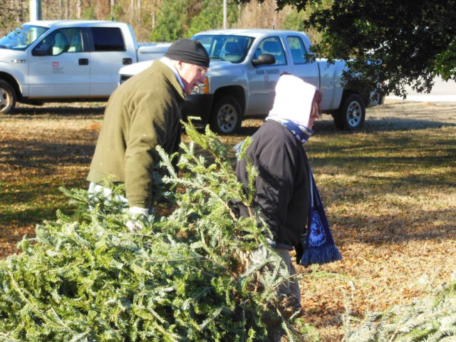 Christmas tree lots and farms often give away free trees during their last day of operation -- on or near December 24.