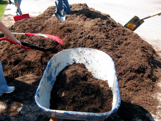 There are a handful of great places to find free mulch - you just need to know where to look! Start here.