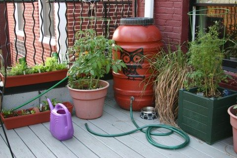 Using a natural painted rain barrel and some potted plants is one way to make your own pretty rain barrels.