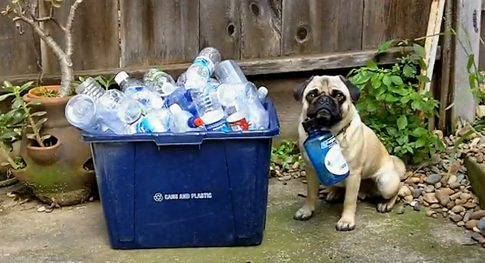 recycling-pug.png