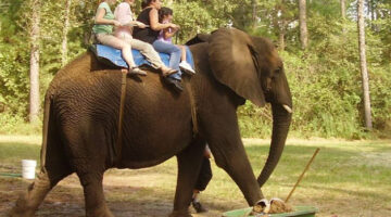 Wildlife Conservation: 3 Unique Wildlife Tours In The U.S. That Support Conservation Efforts