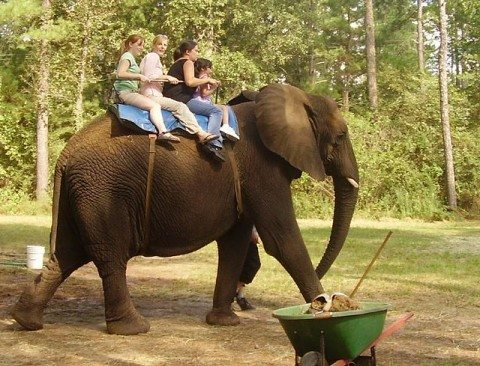 wildlife-tourism-elephant-ride