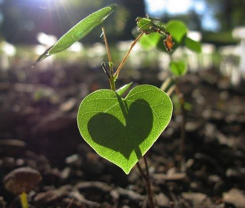 green-leaf-heart.jpg