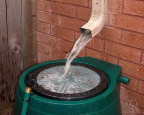 Rainwater collection in action using a rain catcher under the drain